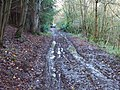 Muddy bridleway in the woods - geograph.org.uk - 1605498.jpg
