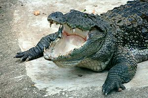 River Monsters - Mugger crocodile
