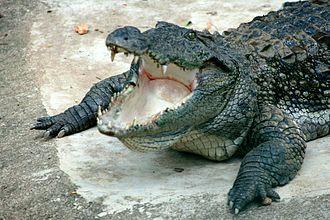 River Monsters - Mugger crocodile