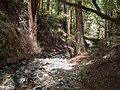 Muir Woods (50564).jpg