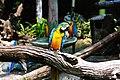 Multicolored parrots (Unsplash).jpg