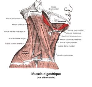La douleur au dessous du thorax sur le dos