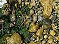 Musgo en rocas acapulqueñas, verde sobre café.jpg