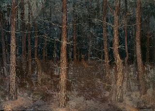 'Mystieke paden': bosgezicht