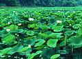 NRCSMD80002 - Maryland (4483)(NRCS Photo Gallery).jpg