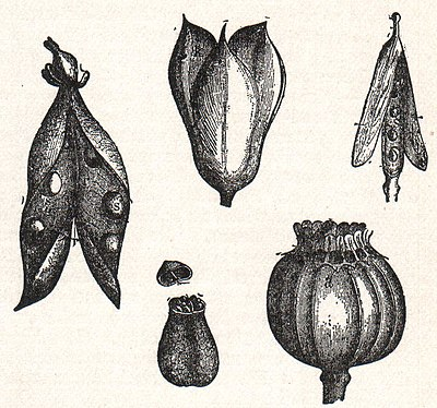 NSRW Various Forms of Dry Fruit.jpg