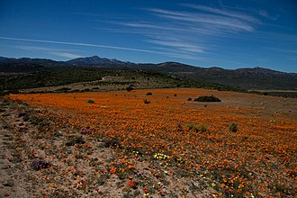 Namaqua National Park - Image: Namaqua NP2