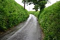 Narrow Devon lane, near Slapton. - geograph.org.uk - 824305.jpg
