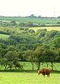 Narrow Valley - geograph.org.uk - 1386409.jpg