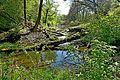 Nationalpark Donauauen, Stopfenreuther (Hainburger) Au2.jpg