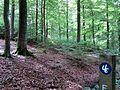 Nationalpark Kellerwald Edersee urwaldsteig zw peterskopf und sauermilchzplatz ds wmc 11 07 2012 eins.jpg