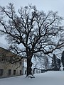 Naturdenkmal Schloss Wetzlas 04.jpg