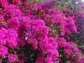Natureza em flor - panoramio.jpg