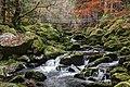Naturpark bayerischer wald wolfsteiner ohe.jpg