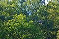 Naturschutzgebiet 11.JPG