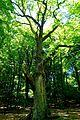 Naturschutzgebiet Granitz - Forst Werder (3).jpg