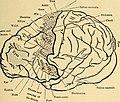 Nervous system 14592646727 161da8508a o.jpg