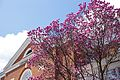 Newcomb Hall UVa pediment tulip tree.jpg