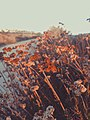 Newport Coast, Newport Beach, United States (Unsplash).jpg