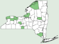 Nicandra physalodes NY-dist-map.png