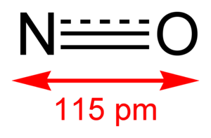 Nitrovasodilator - Nitric oxide