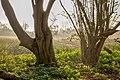 Nordkirchen, Naturschutzgebiet Ichterloh -- 2018 -- 2114-8.jpg