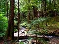North Cascades National Park (9290017861).jpg