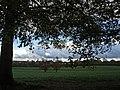 November Skies (22458930099).jpg