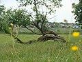 Novomalyn, Rivnens'ka oblast, Ukraine, 35843 - panoramio.jpg