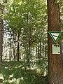 Oberrimbacher Erdfälle 202006 07.jpg