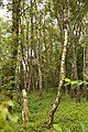 Obersteinbeck Naturschutzgebiet Am Kaelberberg 06.JPG