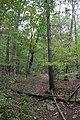 Ohiopyle State Park River Trail - panoramio (127).jpg
