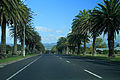 On the road to Auckland (5645143279).jpg