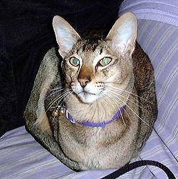 www.ebony maca vruće sise pušenje