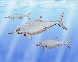 Timeline of ichthyosaur research