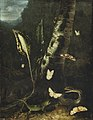 Otto Marseus van Schrieck - A forest floor with a lizard, a snake and butterflies.jpg