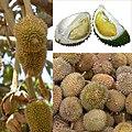 Owoce Durian.jpg