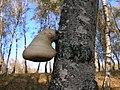 Pădurea de argint Dobreni 12.JPG