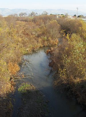 Pajaro River - Pajaro riparian area