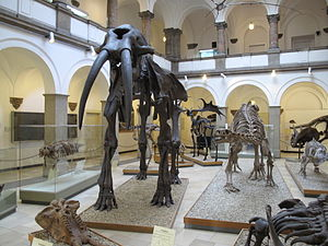 Palaeontological Museum, Munich - Exhibition of the Paläontologisches Museum.