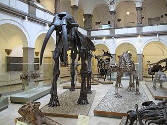 Palaeontological Museum, Munich - Exhibition of the Paläontologisches Museum.