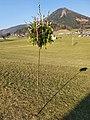 Palmbuschen Faistenau 2020.jpg