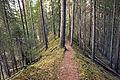 Palsankosken luontopolku 4.jpg