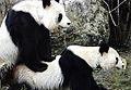 PandaAwarenessORG Beispiel.jpg