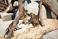Parc Zoologique de Paris, 5 April 2014 (9).jpg