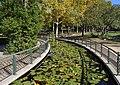 Parc de l'Alqueria Nova de Gandia, bassa amb nenúfars.jpg