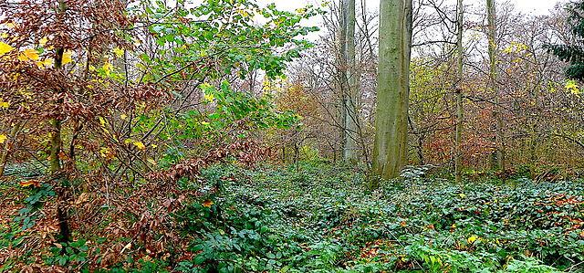 13 ноября 2015 в парке Бенрат, Дюссельдорф. Свободное изображение Викимедии, автор - Алексей Потупин (старший).