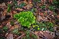 Park prirode Papuk (Phantography) 35.jpg