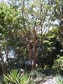 Parque del Este 2012 050.JPG