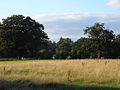 Pasture, Binfield - geograph.org.uk - 1571048.jpg